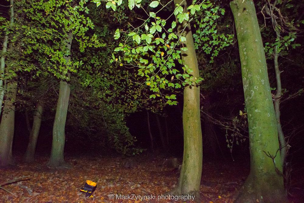 Trees-woodlands-8526.jpg