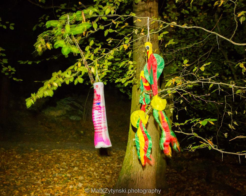 Trees-woodlands-8536.jpg