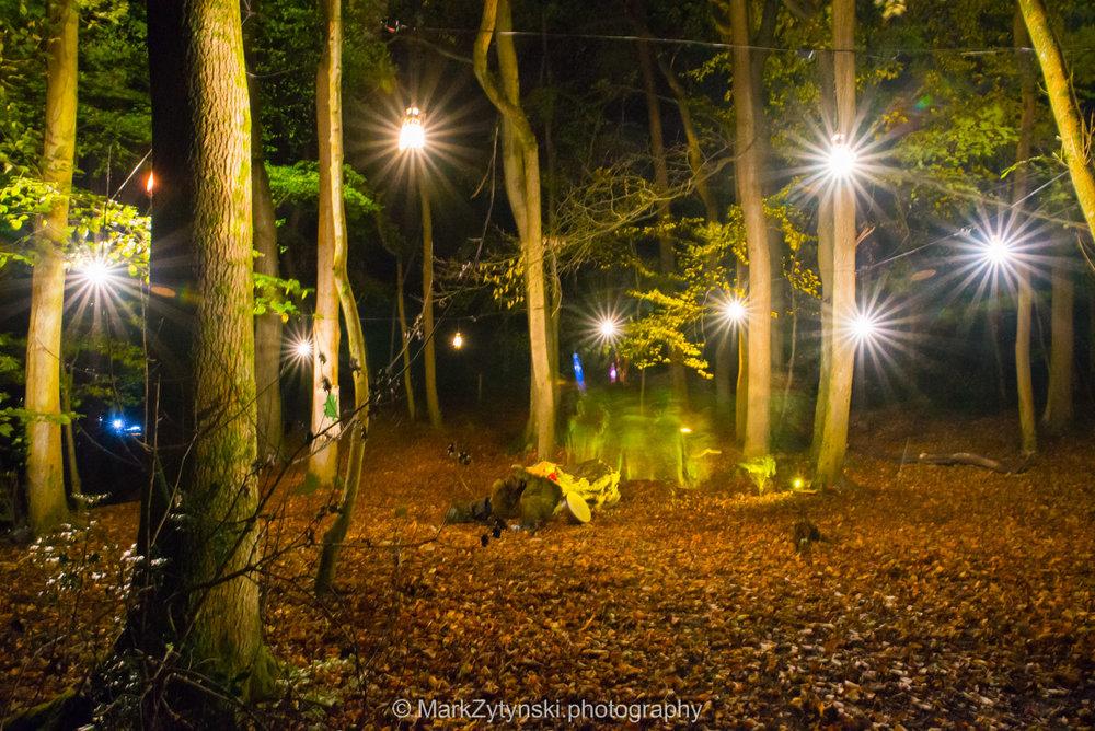 Trees-woodlands-8618.jpg