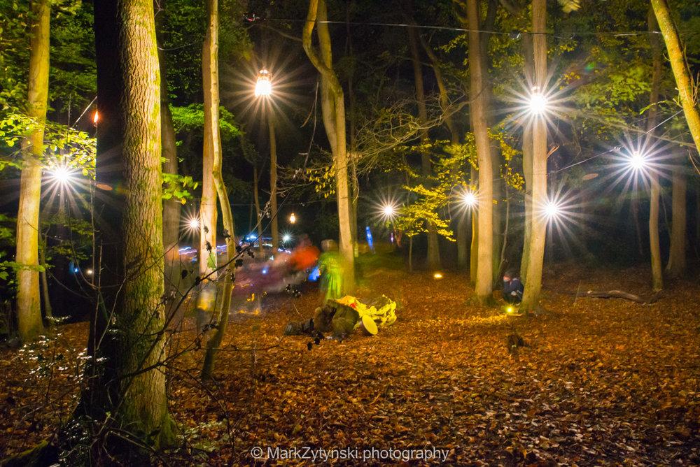 Trees-woodlands-8620.jpg