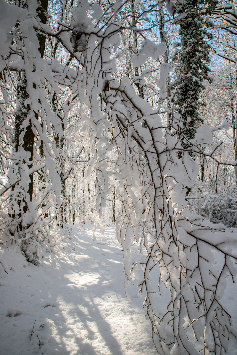 Trees-woodlands-snow-8964.jpg