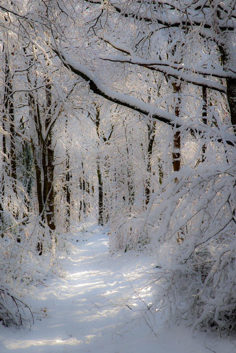 Trees-woodlands-snow-9050.jpg
