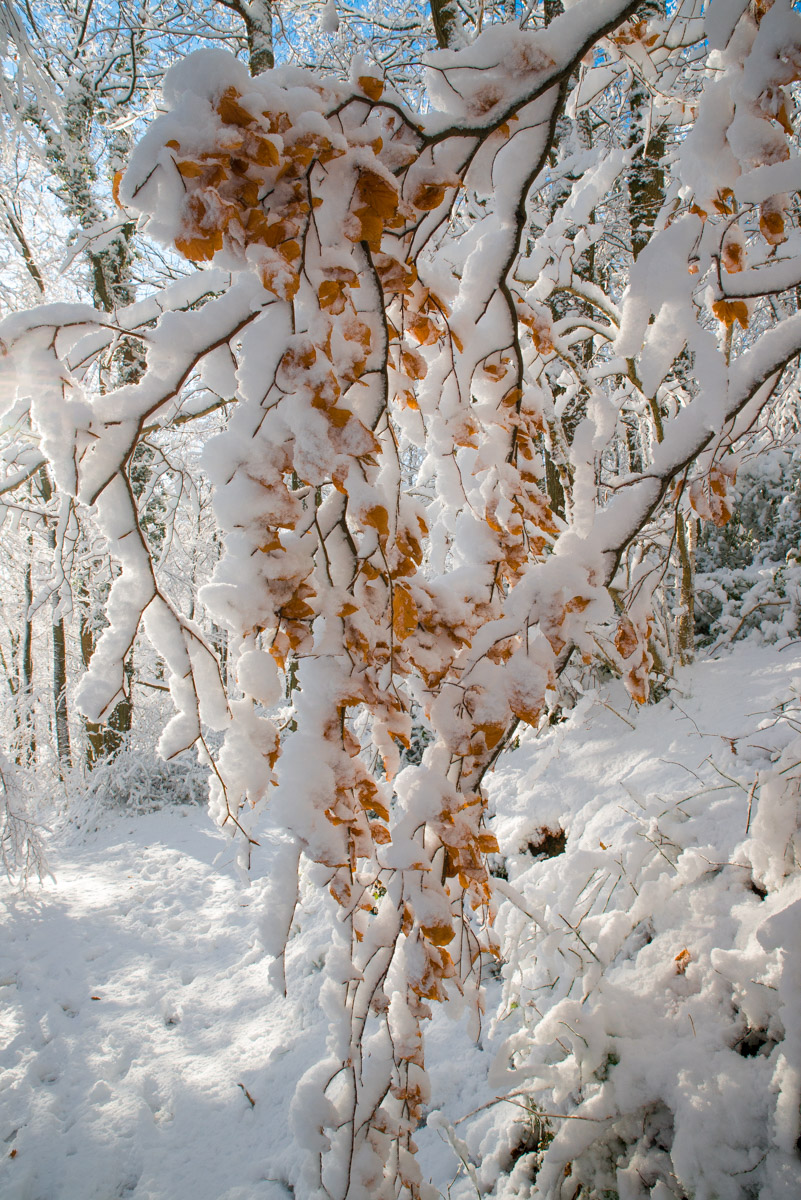 Trees-woodlands-snow-9053.jpg