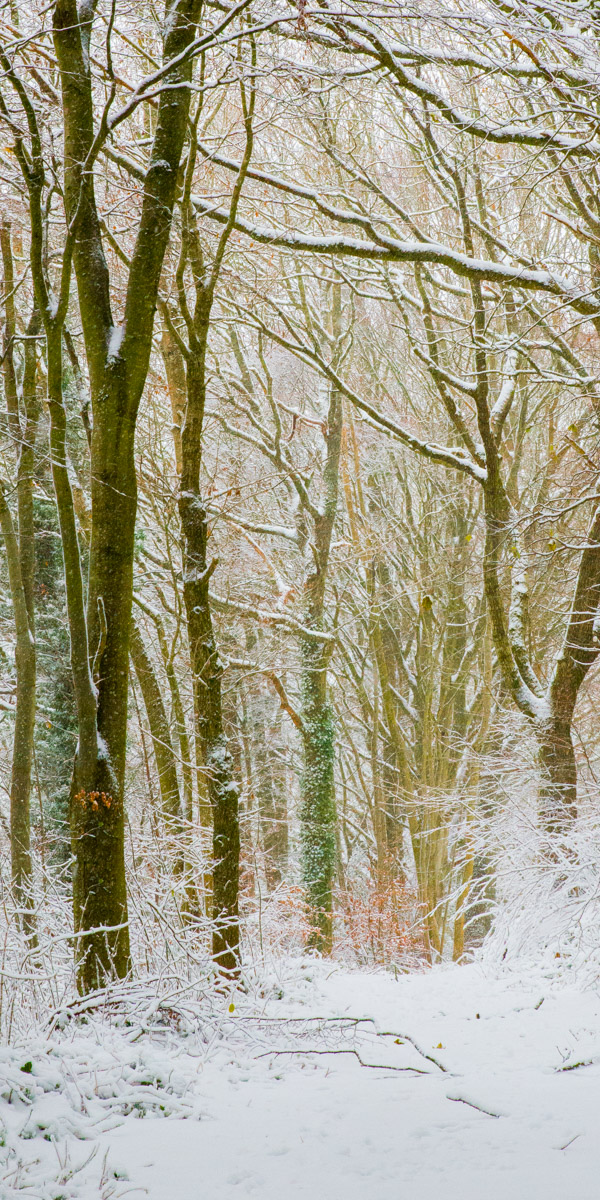 Trees-woodlands-snow-8902.jpg