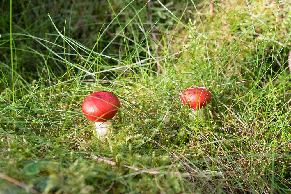 Fungi in woodland.jpg