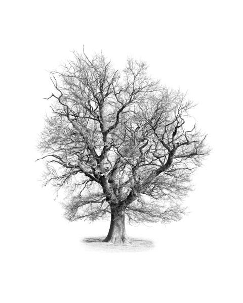 J - Naked Oak