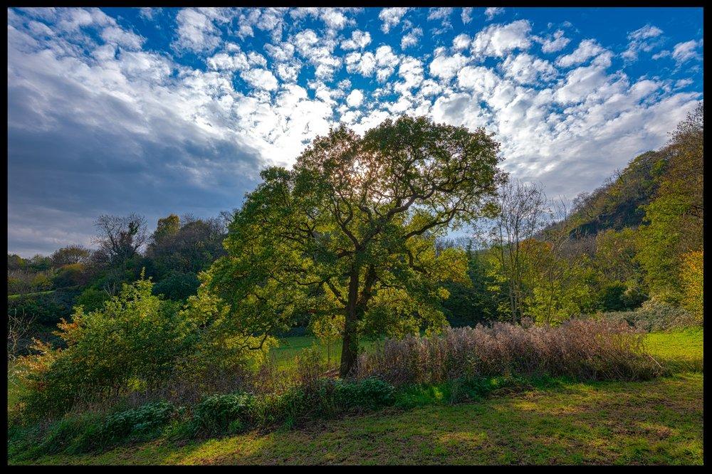 Zytynski-Autumn-Woodlands-6.jpg