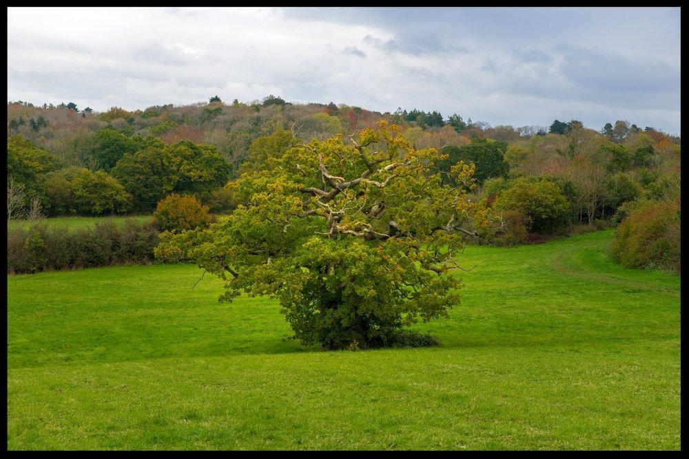 Zytynski-Autumn-Woodlands-7.jpg