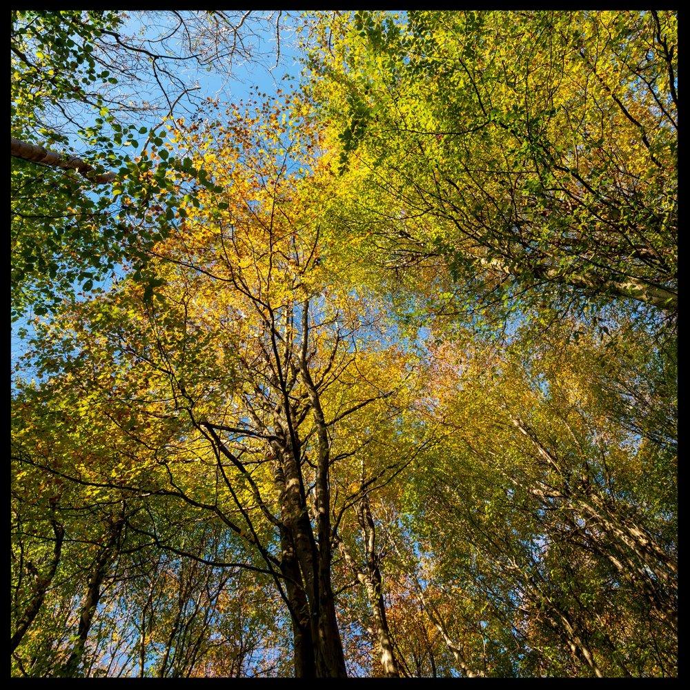 Zytynski-Autumn-Woodlands-8.jpg