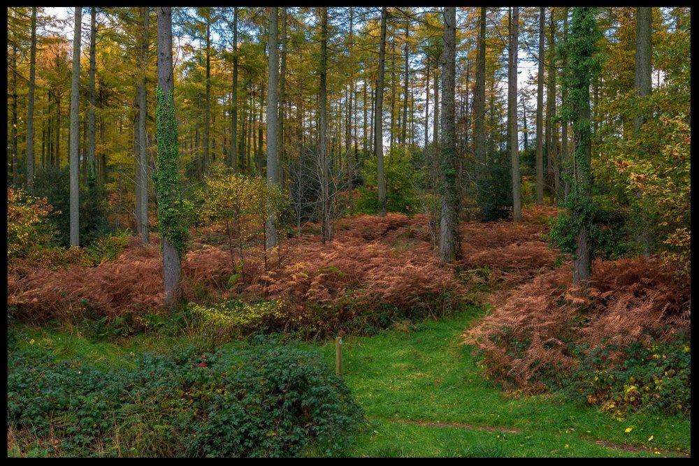 Zytynski-Autumn-Woodlands-11.jpg
