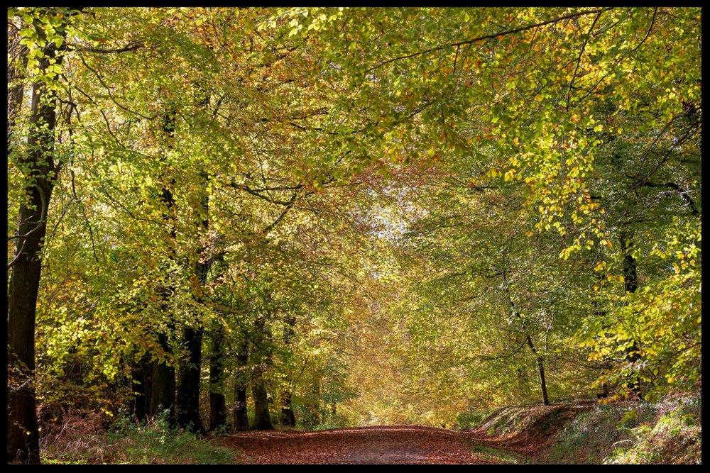 Zytynski-Autumn-Woodlands-14.jpg