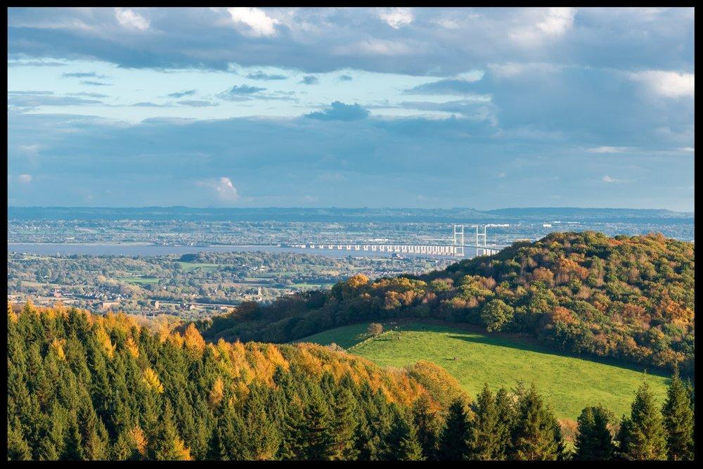 Zytynski-Autumn-Woodlands-20.jpg