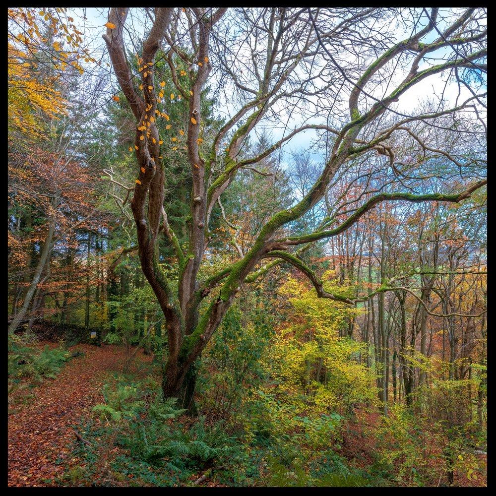 Zytynski-Autumn-Woodlands-23.jpg