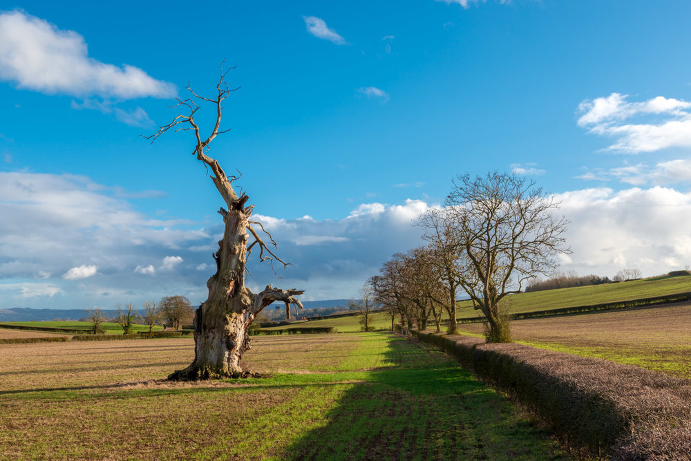 Zytynski-Winter-Oak-Trees-4.jpg