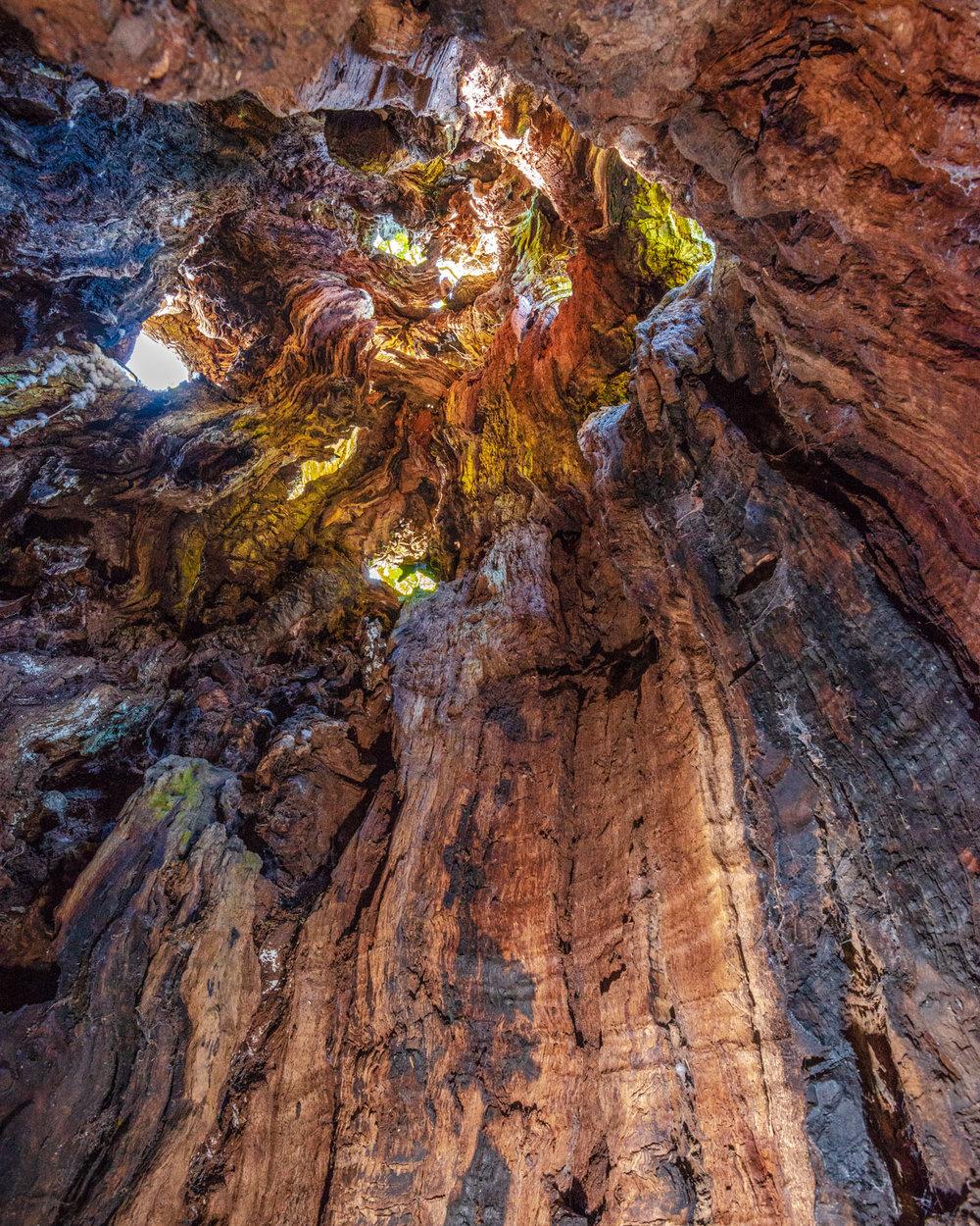 Inside the Pwllpriddog Oak