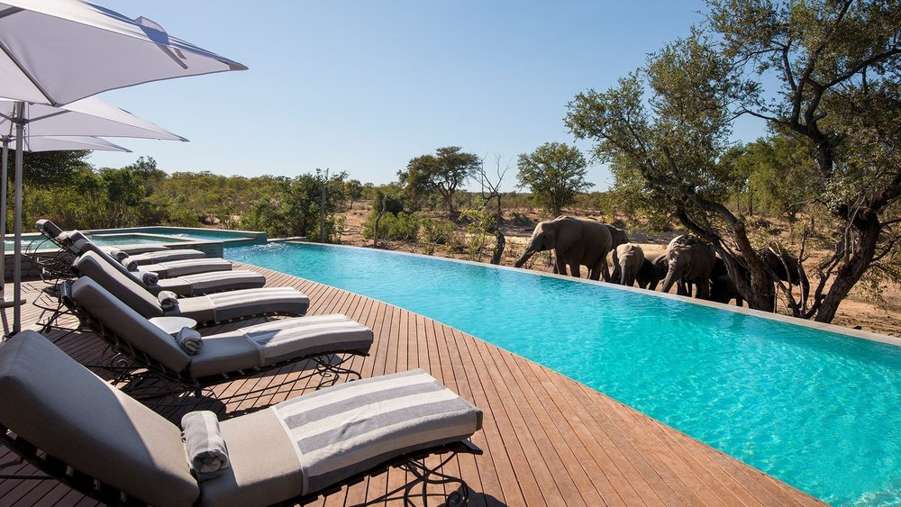 swimming-pool-with-elephants-at-luxury-andbeyond-ngala-safari-lodge-close-to-kruger-national-park-in-south-africa.jpg