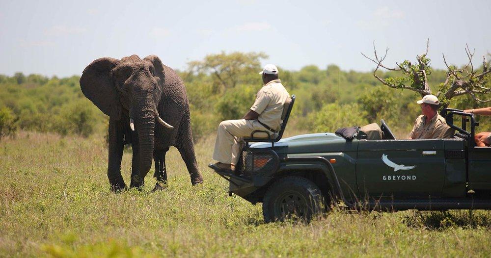 wildlife-safari-ngala-safari-lodge.jpg