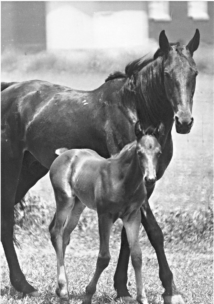 Copy of RR--HOrse and Colt.jpg