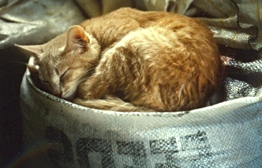 LN--Barn cat.jpg
