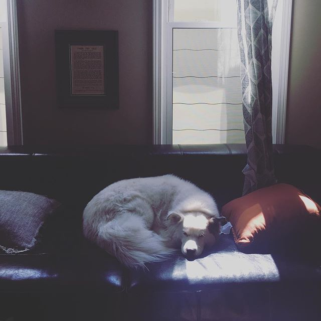 She knows what's up. #saturdayafternoon #loungeitup #doglife #falcore #willa #midwest #kc #liveauthentic #fantastico #thegoodlife
