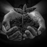Renew-leaf-with-dirt-150x150-1