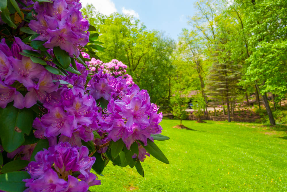 Fernstone Flowers & Landscaping-16.jpg