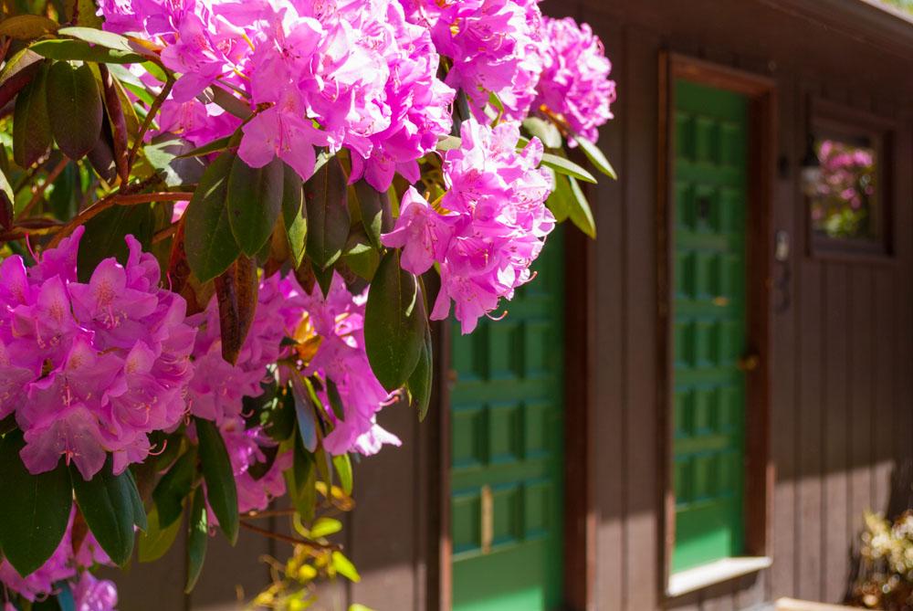 Fernstone Flowers & Landscaping-43.jpg