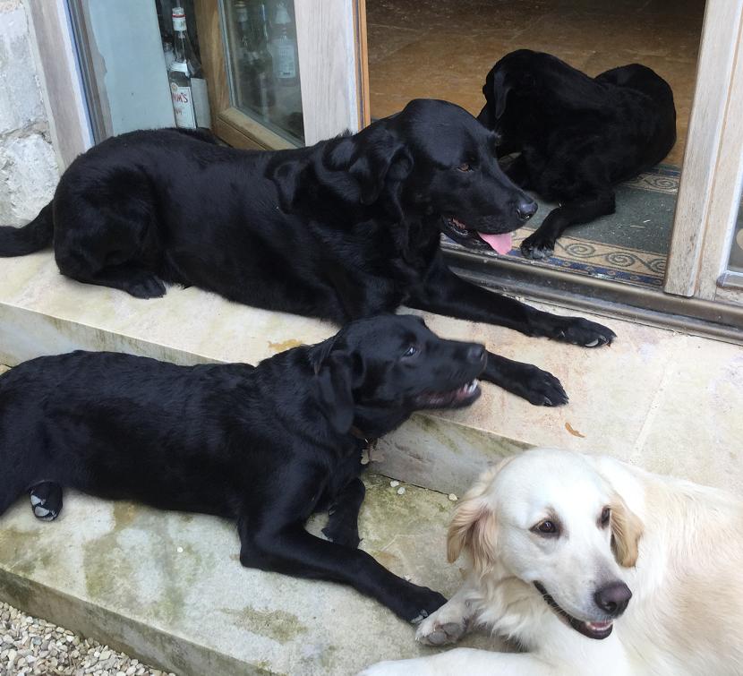 Lola, Woody, Sooty & Bramble