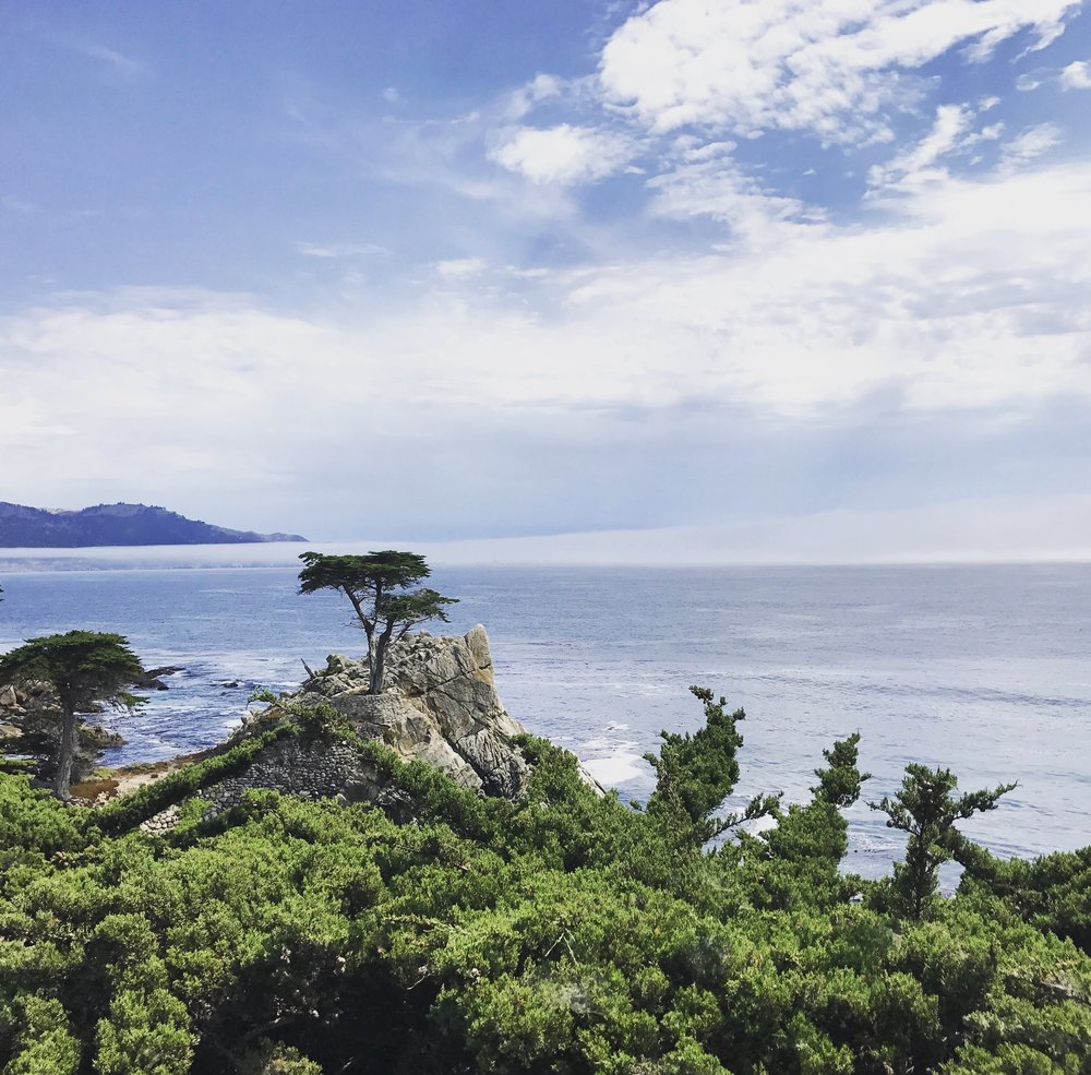 The Lone Cypress in Pebble Beach on the 17 mile drive during a Monterey Tour from San Francisco