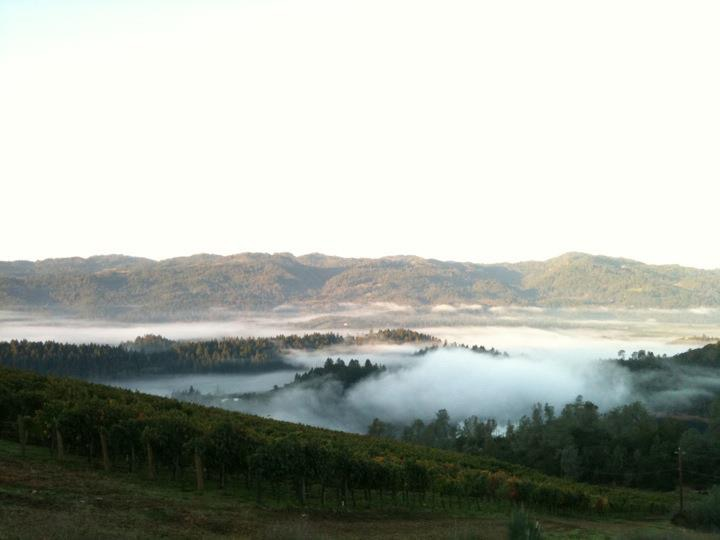 The view from Viader Vineyards as the fog rolls in.