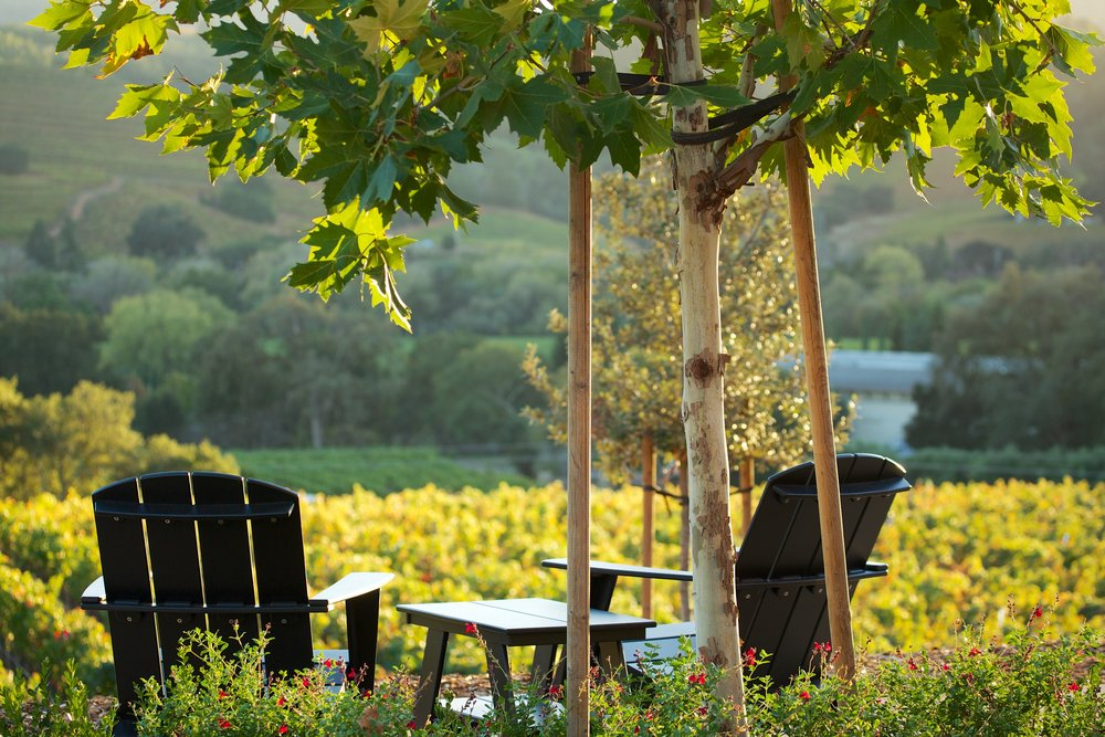Private Napa Wine Tour From San Francisco