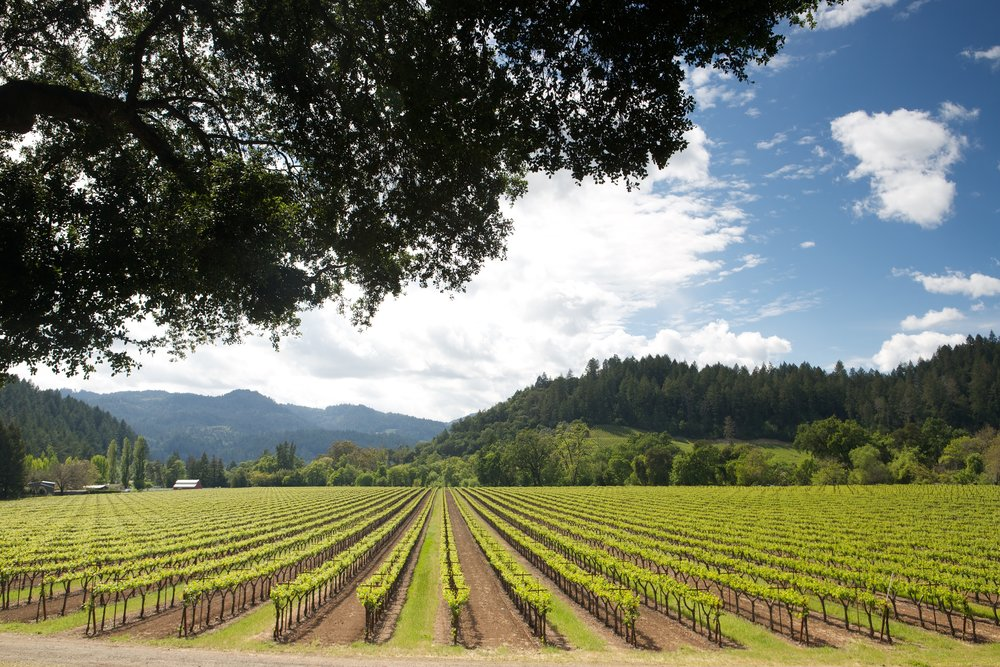 A vineyard in Yountville during the best wine tour from San Francisco