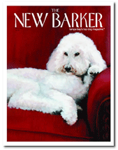 new barker (spring 2008) Everything old is new again. bentley B is featured along with Downtown Dogs (Tampa) on page 52.