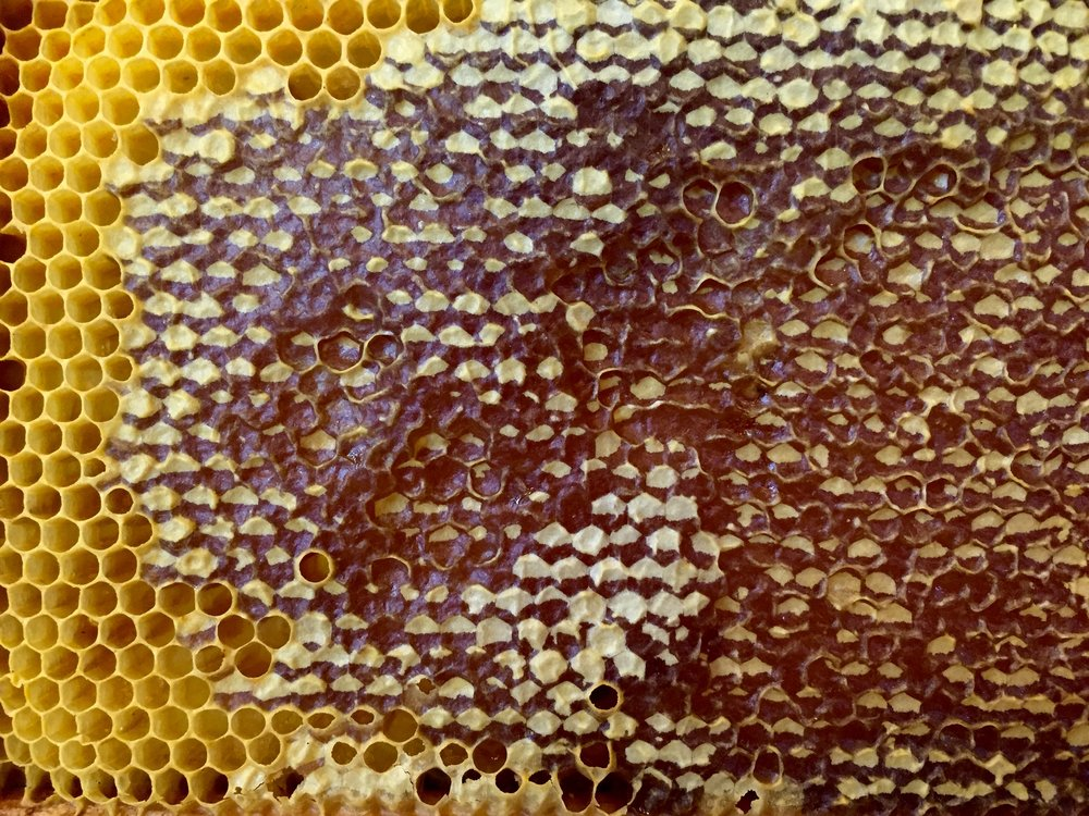 The honey: Where it all starts