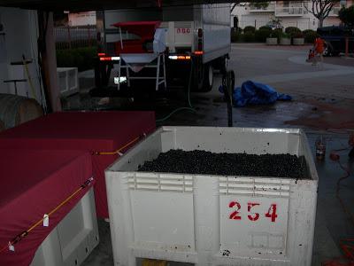 garagiste+harvest+2009+138.jpg
