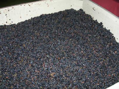 garagiste+harvest+2009+139.jpg