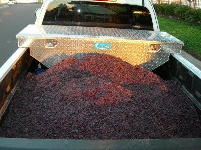garagiste+harvest+2009+048.jpg