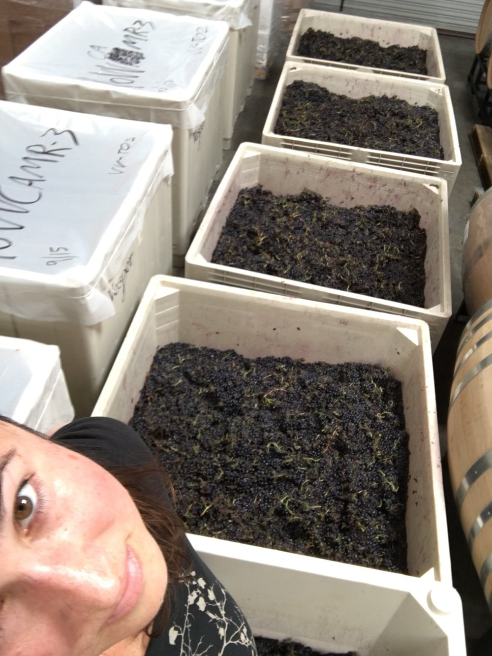 Yes, that's five bins of freshly treaded whole-cluster Syrah for La Belle Rêveuse ... someone will sleep well tonight!