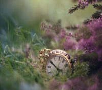 time_forgotten-wallpaper-10519463.jpg