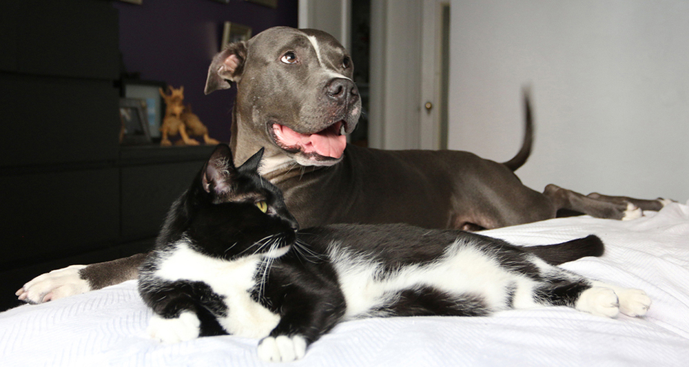 pawsandsnout – Pibble Prince and Tuxedo cat Zoe