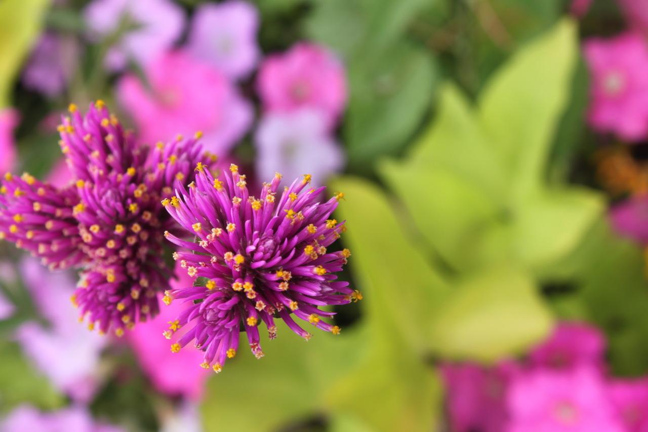 fleurs en france