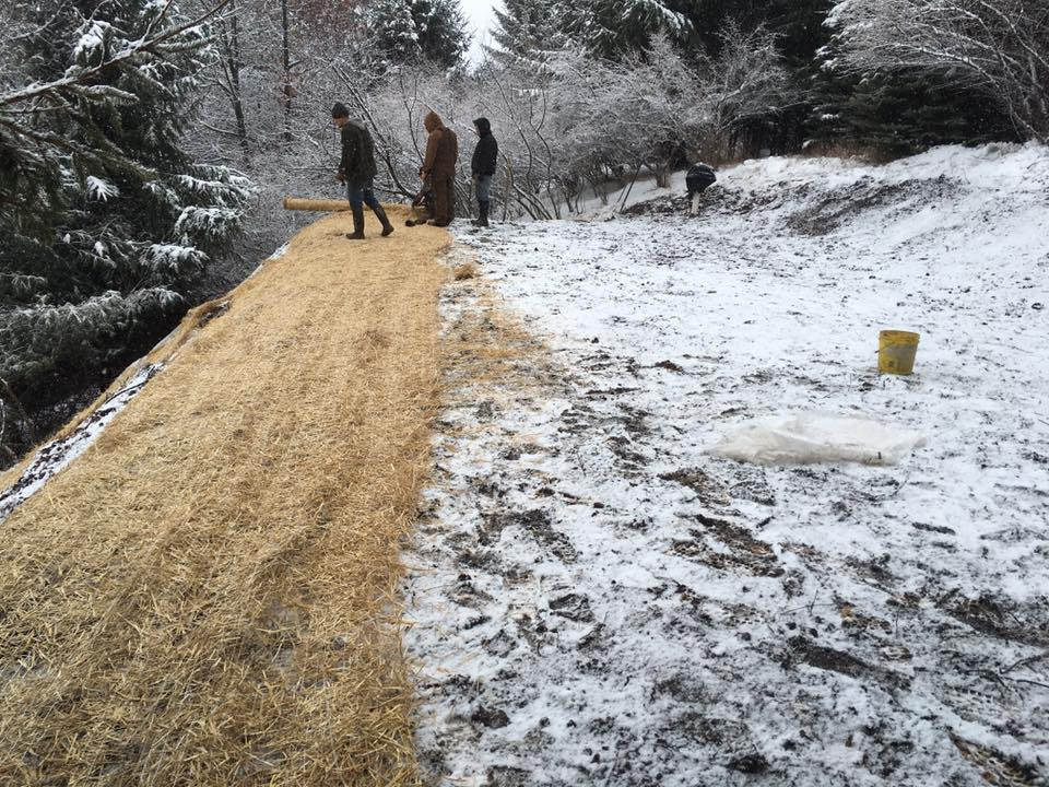 Topsoil/blanket septic drainfield