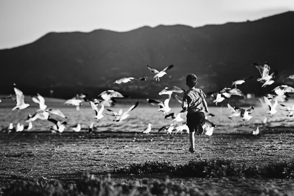 Jayden-birds.jpg