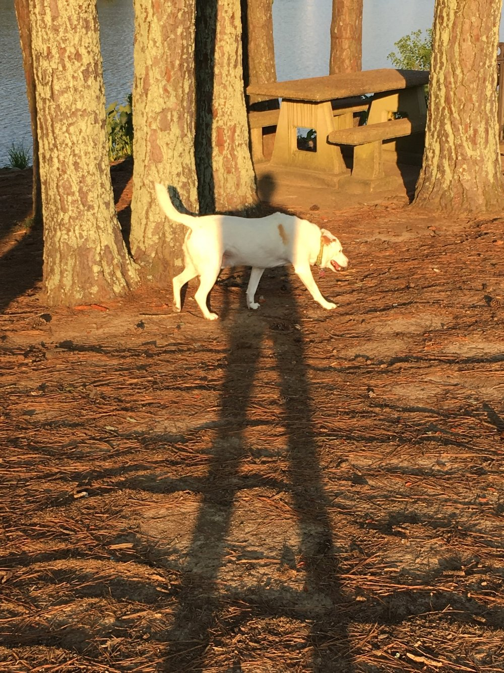 Morning 2 - 1. Go off leash.2. Choose your path.3. When you pass through the shadows, do not fear. It's probably just your pet parent photographing you.