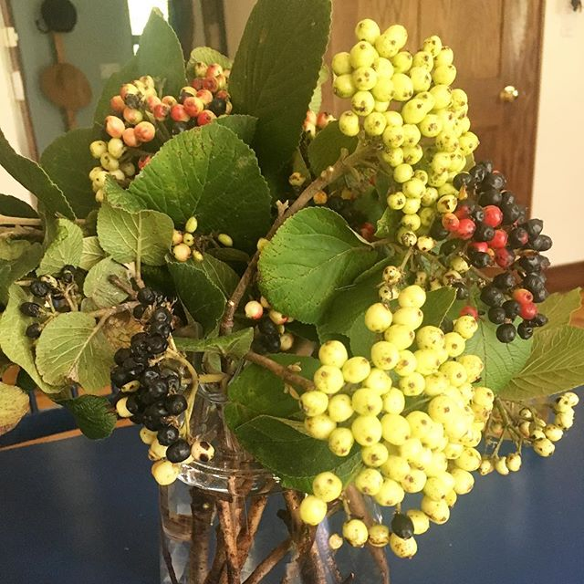 Finally had time to prune my viburnums this week! #gardenbouquet