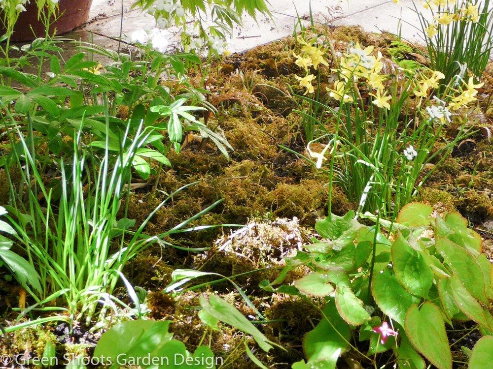 Garden design - woodland planting