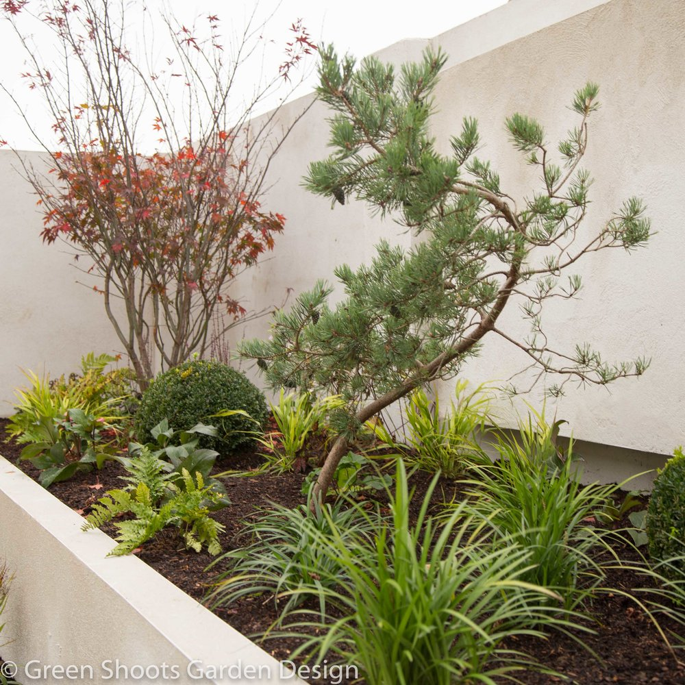 Contemporary Japanese garden