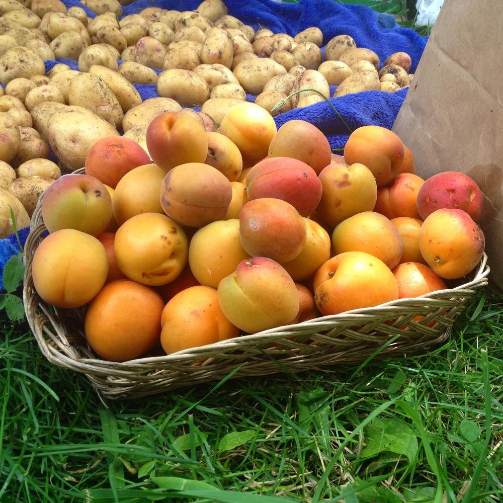 Slow Food preSERVE garden