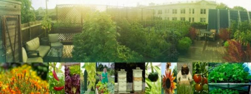 A collage of images from Uncommon Ground Devon's rooftop farm.