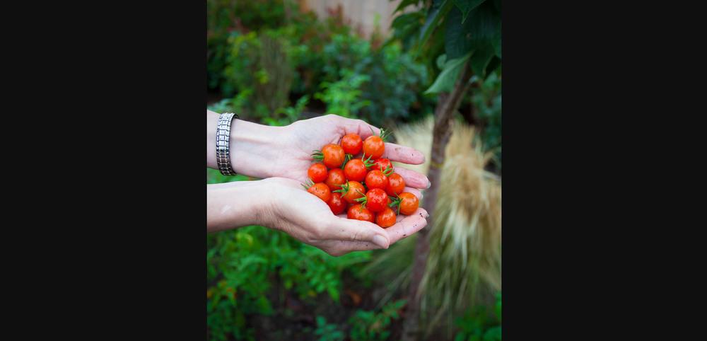 Gma's Garden-003.jpg